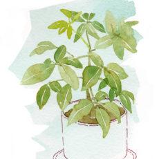 House Plant Portrait Series